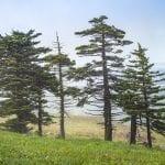 Whitetop Mountain Sentinels